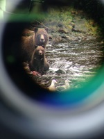 Bears through a scope lens