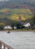 Vineyards along the Rhine River