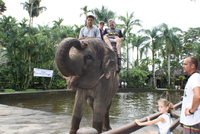 Elephant Safari in Lombok