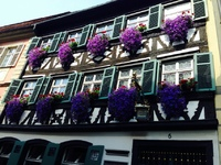 beautiful flower boxes in Germany
