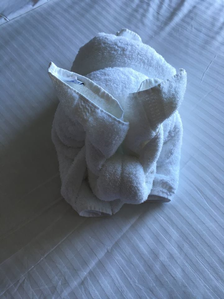 Epic Bunny Awaiting Me - they offer Towel Art Classes