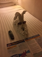 Great service from our cabin steward looked forward to seeing our towel ani