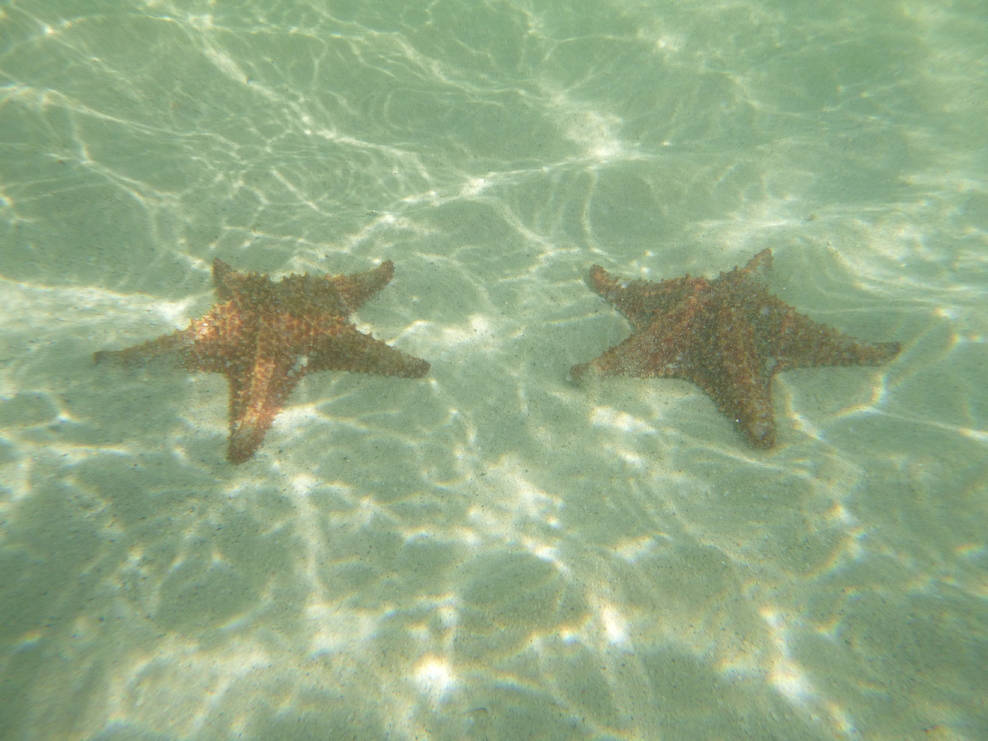 Starfish Beach! Grand Cayman