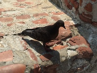 Fort in Cartegena.....the bird was resting:)