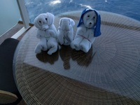 Our suite attendants towel animals