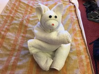 Nightly towel animals