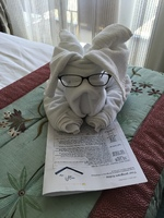 A towel animal and daily cruiser newsletter in our cabin.