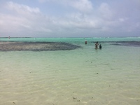 Bonaire, Luc Bay, the water color is beautiful and you can walk forever and it is only up to your waist.
