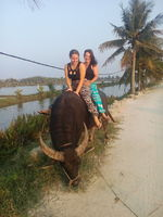Riding on a water buffalo to discover Hoi an countryside tour.