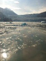 I had the opportunity to see glaciers, floating ice chunks, and  seals sunning