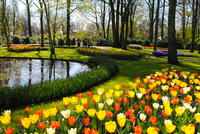 Amsterdam during tulip time