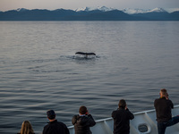 Humpback whale entertaining us.