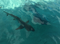 Swimming with the Sharks and Sting Rays.