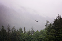 This was at our Lighthouse, Totems and Eagles excursion in Ketchikan.