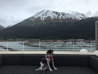In Port in Seward, Alaska on deck prior to sailing. Service dog Katie Meredith May 20, 2016.
