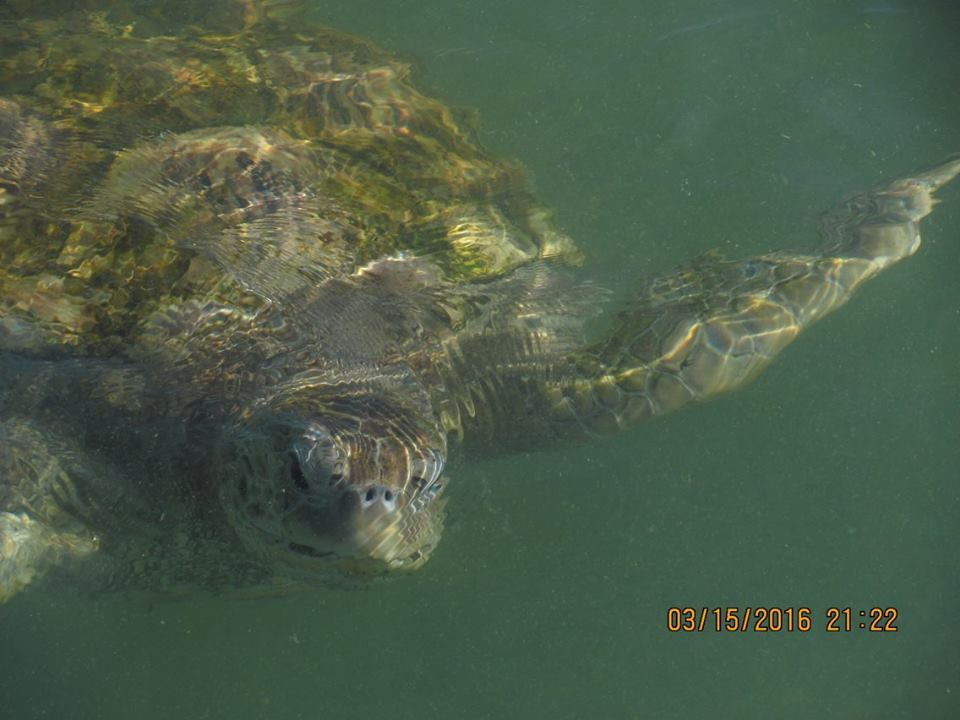 Grand Cayman Island Turtle sanctuary.