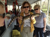 Life in the Bayou, Canon Swamp Tour, up close with an alligator