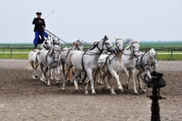 This is a 10 horse team which was the world record being controlled by a Human