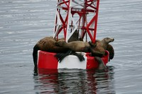 Seals hanging out in glacier bay
