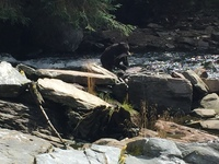 30 feet from a Black Bear during a tour