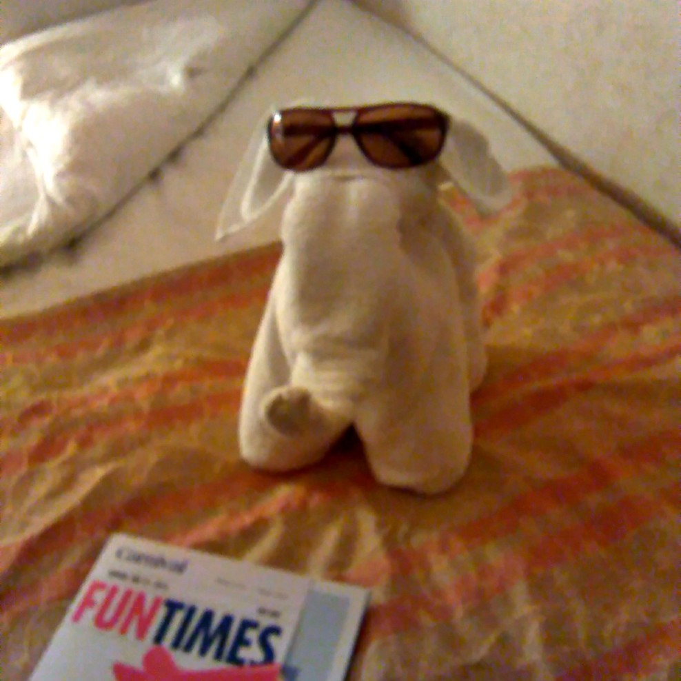 one of my towel animals in my room