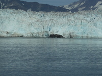 Glacier in Glacier Bay
