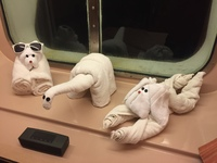 Every night a different towel animal - great job Arthur!!