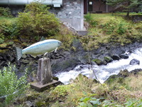 Ketchikan.Loved watching the salmon swim upstream. Amazing nature feat.