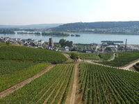 View from chairlift in Rudesheim