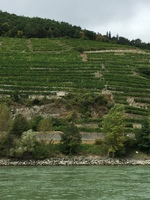 The terraces of grape wines above the Danube in Bavaria. Ingenious engineering.