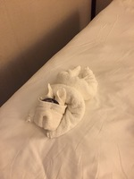 One of many towel animals in our cabin.