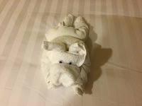Towel animal a dog as our stewards new I liked dogs