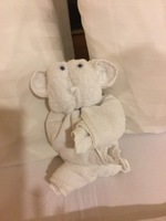 Towel animal a Koala as someone stole the ones I had on our room letter box