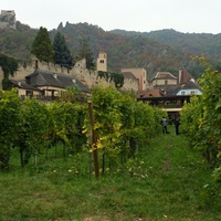 Picking the Grapes in Durnstein