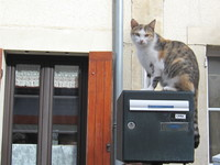 A French cat checking out the cisitirs in Arromanches.