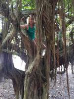 Costa Rica! Making friends with a Banyan tree.