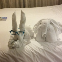 Towel animal wearing my reading glasses!