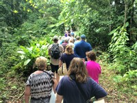 Rainforest walk in the Veragua rainforest.