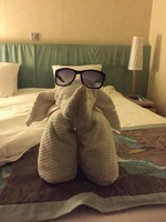 Towel animal in our cabin 11001