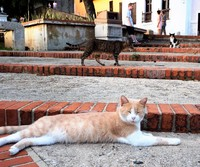 We love walking the blue cobblestone streets of Old San Juan and being greeted by friendly cats around every corner.