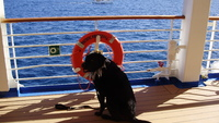 This is my Service Dog Horton onboard the Pacific Princess during Princesses 50th Anniversary celebration onboard the Love Boat.  It was a joyous and wonderful time with all the Love Boat celebrities.