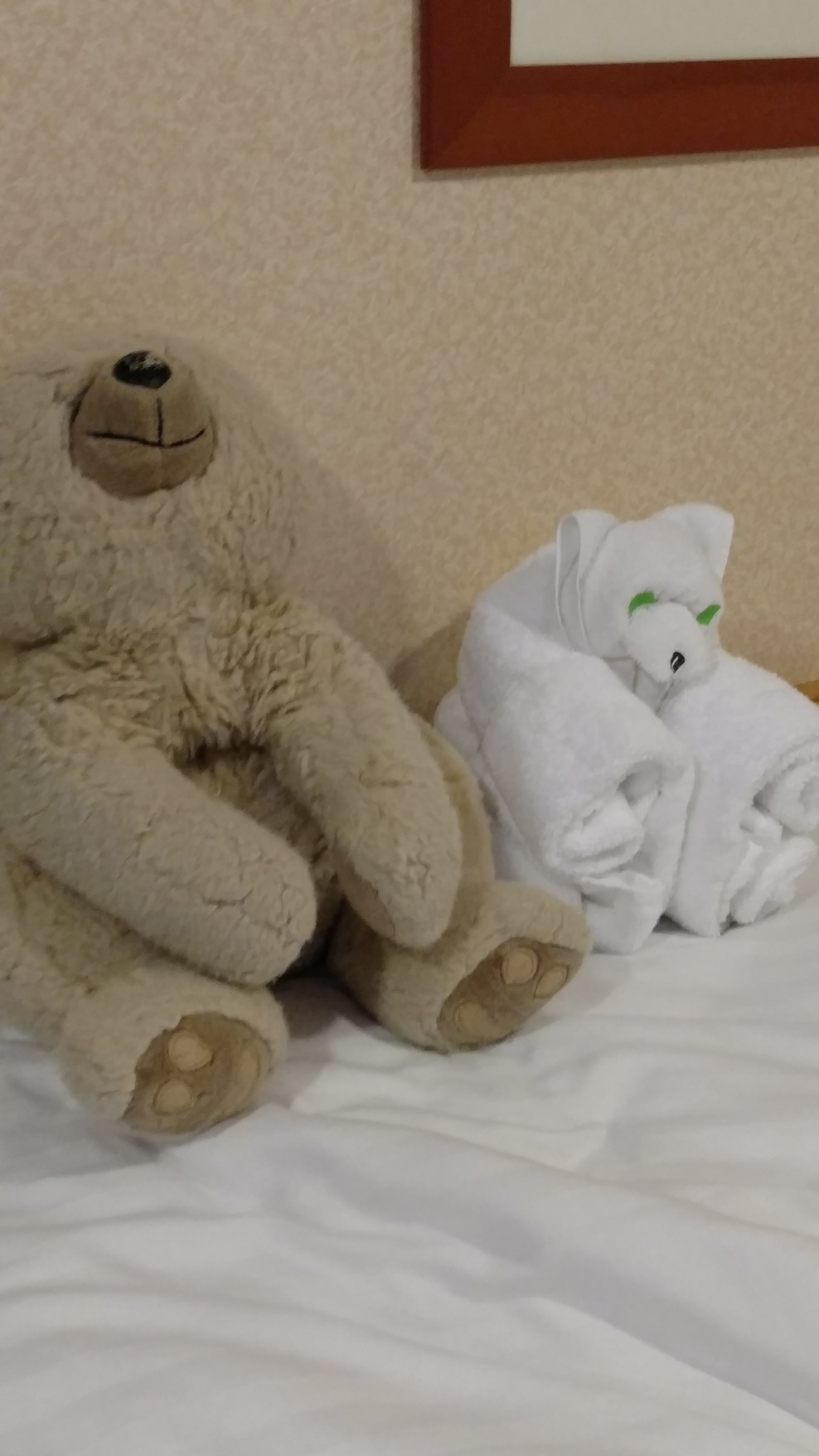 My 21 year old bear Schwartz and his twin towel animal who lasted for the whole two week trip!