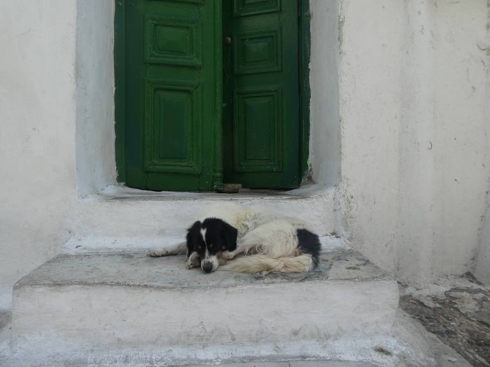 Homeless dog in cinque terra