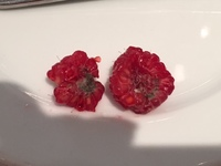 molded berries