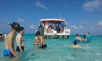 grand cayman: stingray tour