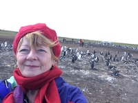 Penguins Falklands to Bluff Cove, excellent!!!!!
