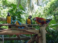 Macaws at the Cartagena pier