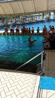 Blue Lagoon Shallow Water Dolphin Encounter