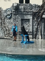Sea lion show from our Cozumel excursion. We also had snorkeling, buffet lu
