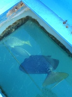 Glass bottom boat fish, only $20 and great views around rocks